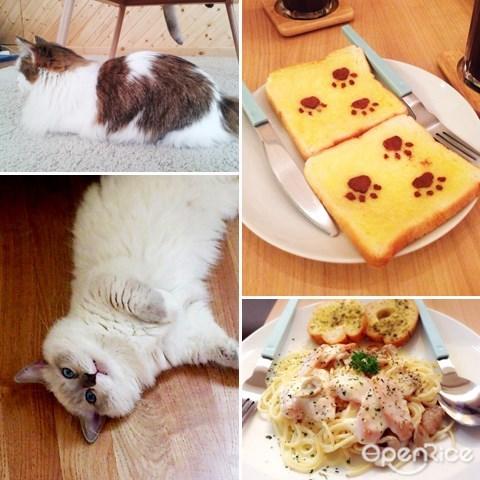 thailand, cataholic, cat theme cafe, 主题餐厅, 泰国, 曼谷, bangkok