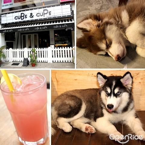 宠物, 咖啡馆, cubs & cups, 狗, sri hartamas