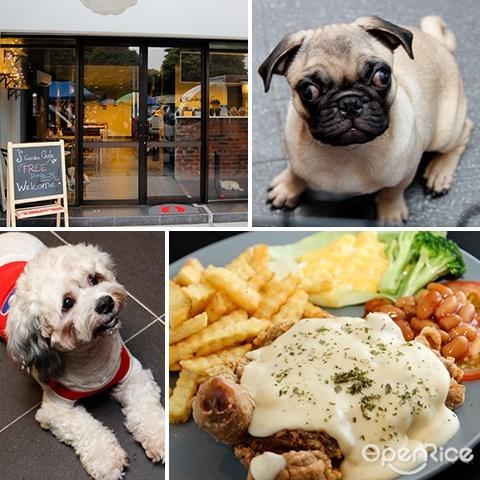 宠物, 咖啡馆, 狗, s garden, pug, dog, pandan indah