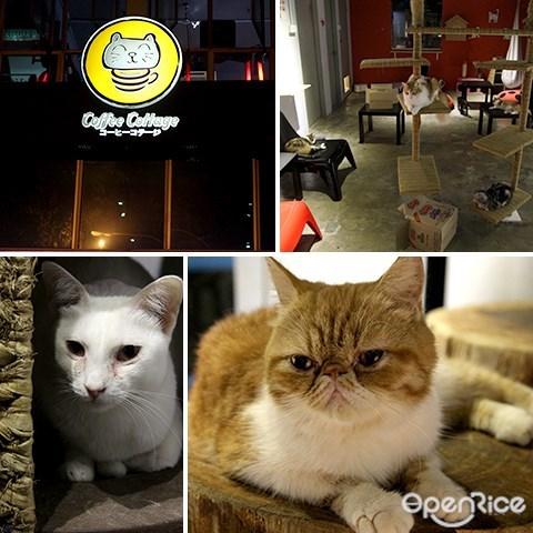 宠物, 咖啡馆, coffee cottage, 猫, subang ss15