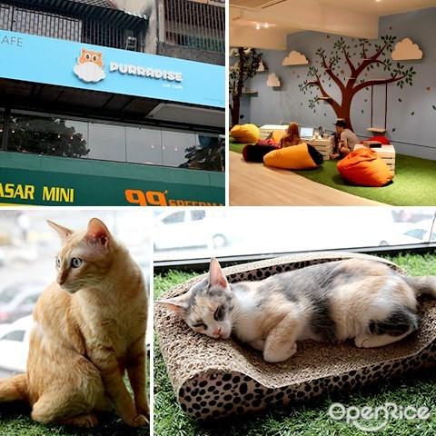 宠物, 咖啡馆, 猫, purradise, ttdi
